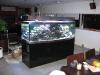 akvarium-008