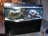 akvarium-010