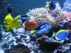 akvarium-012